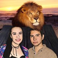 Captan a leones africanos tapándose del frio con colchas con estampado de humanos